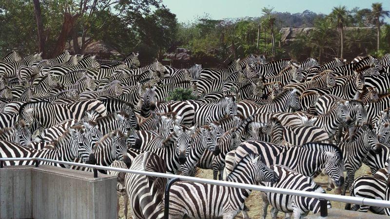 Philanthropy FTW: The Bill And Melinda Gates Foundation Has Donated 250  Million Zebras To Seattle's Woodland Park Zoo - ClickHole