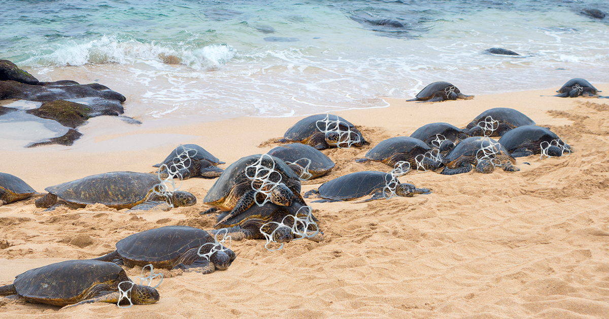 Yikes, This One's On Them: Thousands Of Endangered Turtles Have Been Found Dead After Auto-Erotically Asphyxiating On Plastic Six-Pack Rings